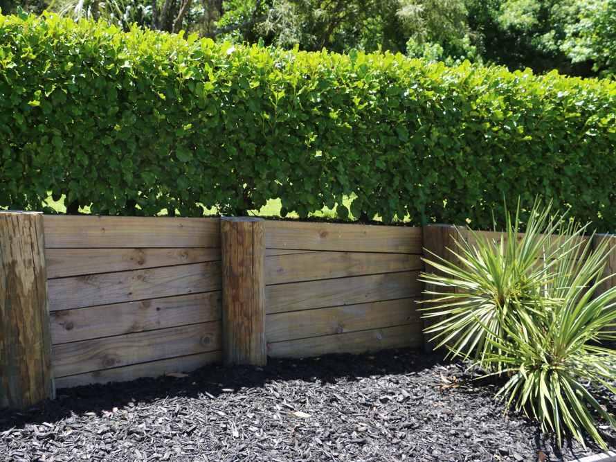 Hedge trimming & maintenance 04