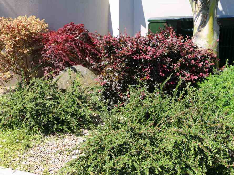 Overgrown-gardens-Need-a-weed-whacker-or-weed-matting-02