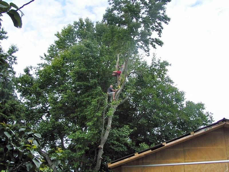 Tree-Shaping-Trimming-Pruning-01