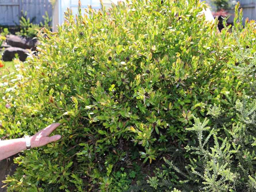 Tree-Shaping-Trimming-Pruning-04